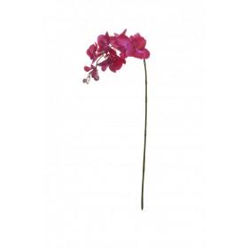 01325 Фаленопсис фиолетовый 74см