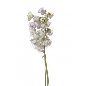 02297 Душистый горошек бело-фиолет.3цв.